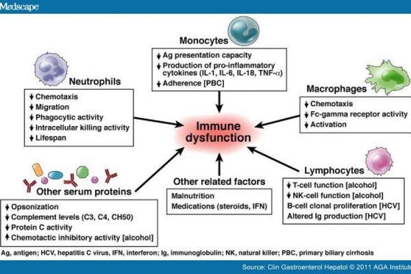 Immune functions assays - R E D  Laboratories